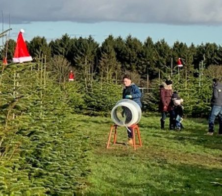 Pick Your Own Christmas Tree 'Clic Sargent'